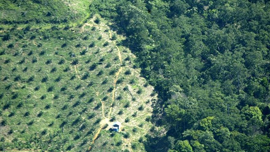 El aceite de palma, un ingrediente con limitaciones