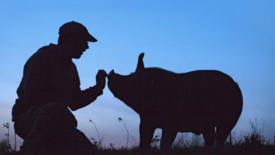 Póster de la película The Last Pig ©The Last Pig
