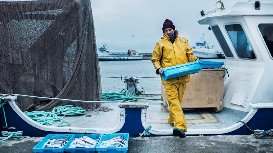 Descarga de productos pesqueros, en una instalación portuaria de las islas