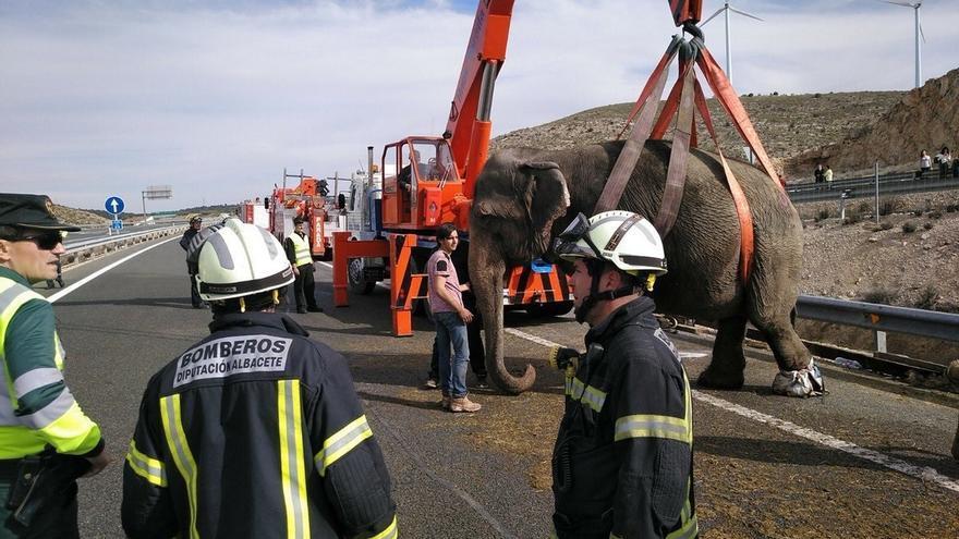 Restablecido el tráfico en la A-30 en Pozo Cañada tras el accidente de un camión que transportaba elefantes