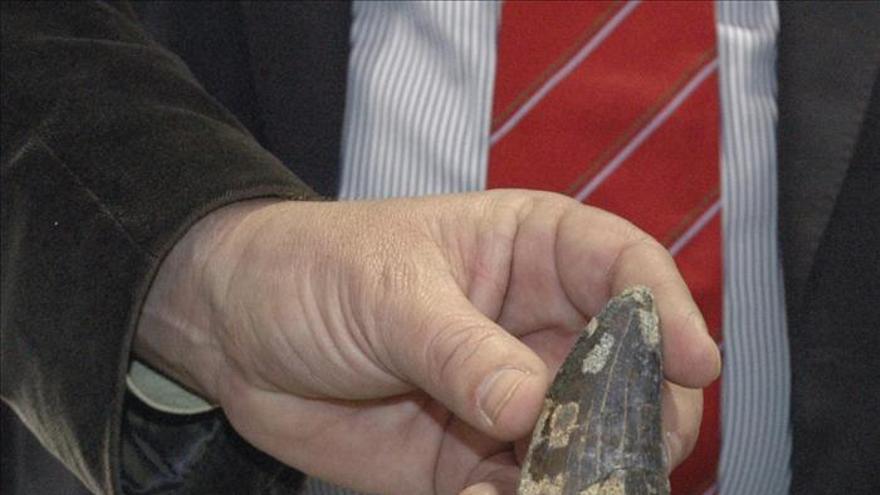 Hallan restos de un dinosaurio de hace más de 100 millones de años en Malasia