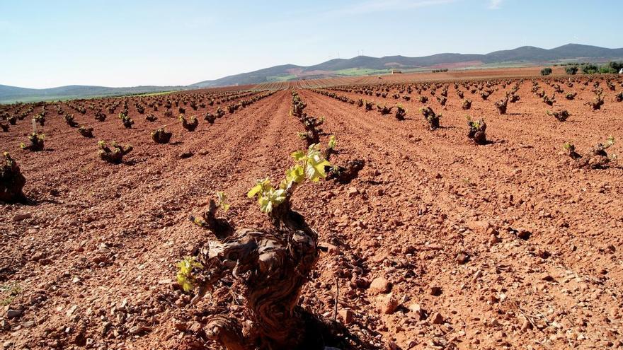 Castilla-La Mancha es la región europea en mejor posición para llegar a tener el 25% de su superficie agraria útil en ecológico en 2030