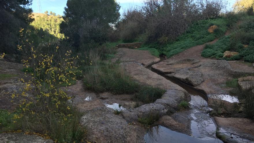 El frágil equilibrio de los anfibios en la rambla del puerto de la Cadena