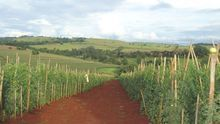 Agricultores y ganaderos aragoneses piden hacer productos artesanos sin estar inscritos en el RGSEE
