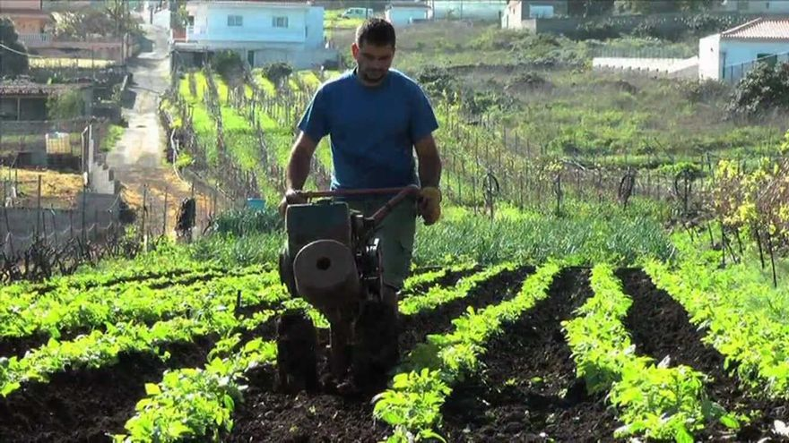 Agricultor en tareas de labranza de sus papas