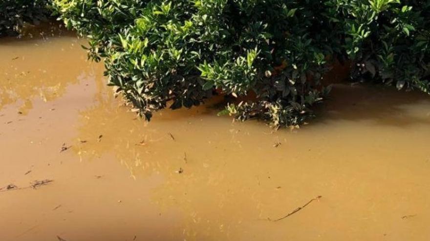 Campo de naranjos inundado en Tavernes de la Valldigna