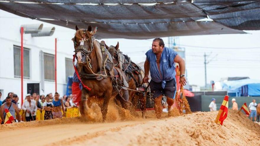 Durante la Feria del Ganado de Xàtiva se celebran competiciones de Tiro y Arrastre