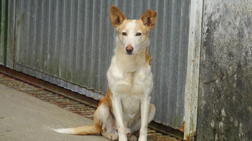 Imagen de archivo de un perro en la calle