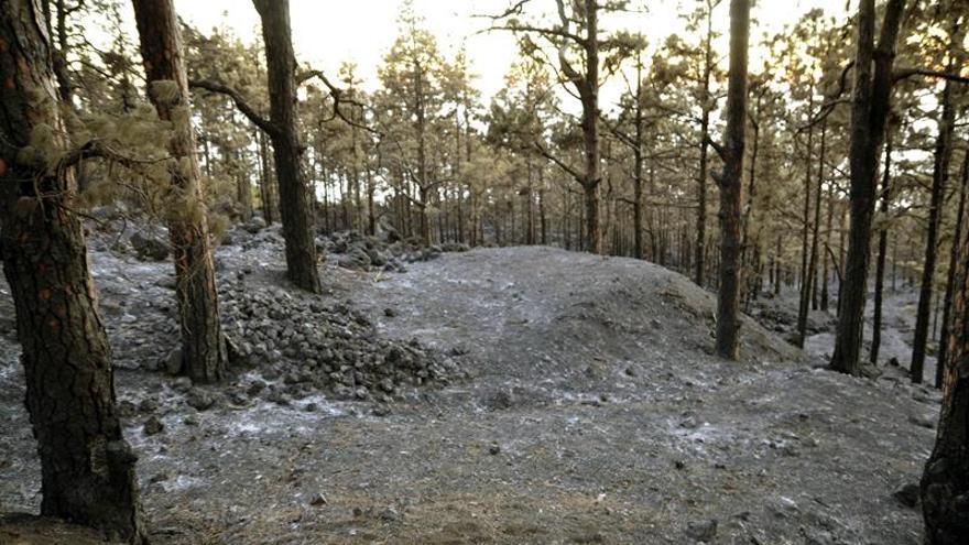 Aspecto que presenta el Parque Natural de Cumbre Vieja por los efectos del incendio forestal que se declaró el pasado miércoles en el municipio de El Paso y que ha afectado a los términos de Fuencaliente y Villa de Mazo.