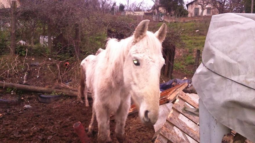 Retiran a una familia de Barakaldo tres yeguas y un burro maltratados, a petición de la asociación animalista APROVA