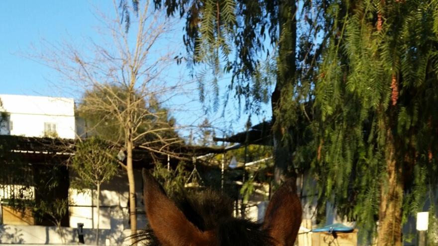 Blancanieves, en el refugio | Foto cedida por la asociación CYD Santa María