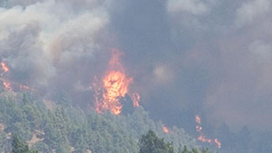 El fuego arrasó este verano varias zonas de los municipios de mazo y Fuencaliente. (ACFI PRESS)