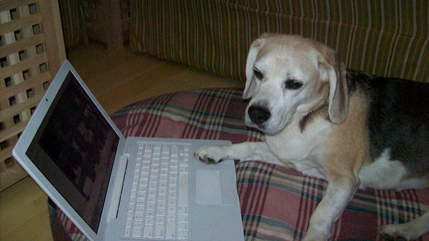 En Internet, ya todos saben que esto es un perro...