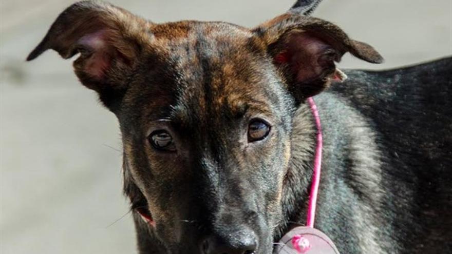 Cooper, el perro adoptado y posteriormente asfixiado por su dueño.