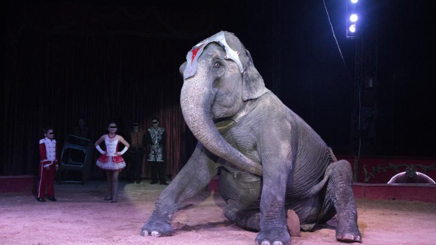 Aragón ha prohibido la participación de animales silvestres en los circos