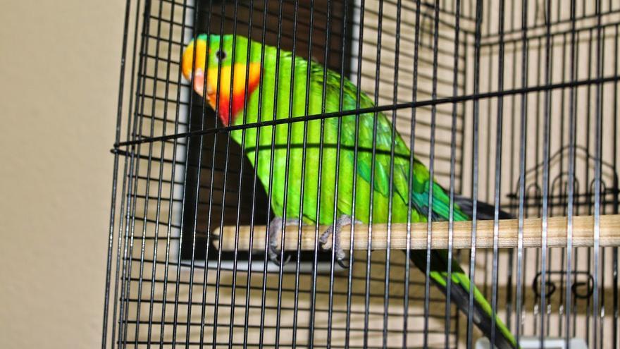 Asociación Ornitológica de Villarrobledo