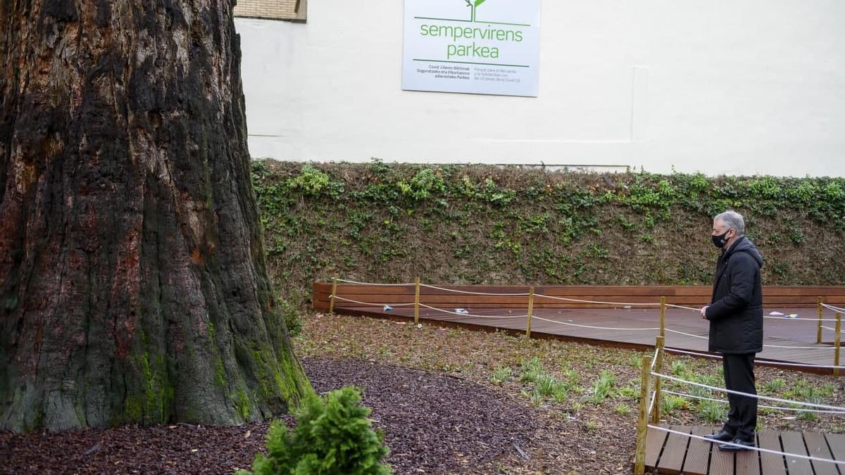 El lehendakari, solo bajo la secuoya gigante, en su homenaje a las víctimas del coronavirus de este miércoles