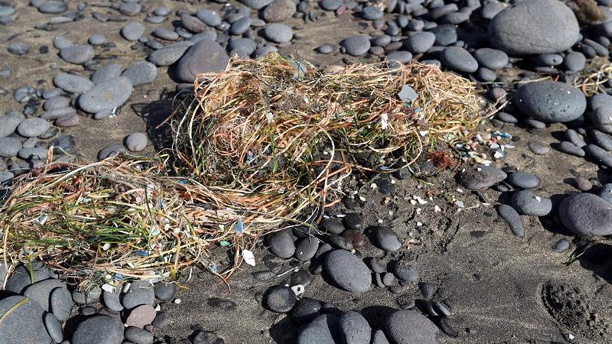 Microplásticos en la playa de Famara