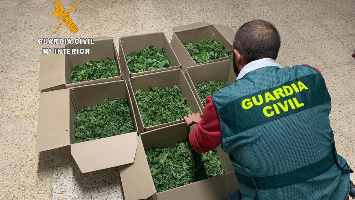 La Comandancia de Cáceres ha puesto en marcha un plan contra el tráfico minorista de drogas en zonas de ocio y diversión