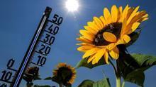 La mortalidad por exceso de calor ha descendido del 14 al 1 % en una década