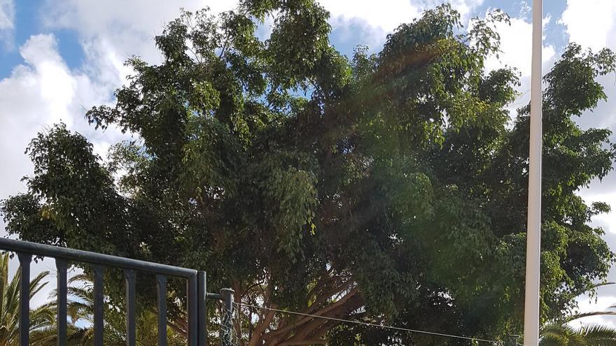 El concejal del PP Gonzalo Pérez en el Ayuntamiento  de Santa Cruz de La Palma pide que dote al barrio de Mirca de otro parque infantil en condiciones.