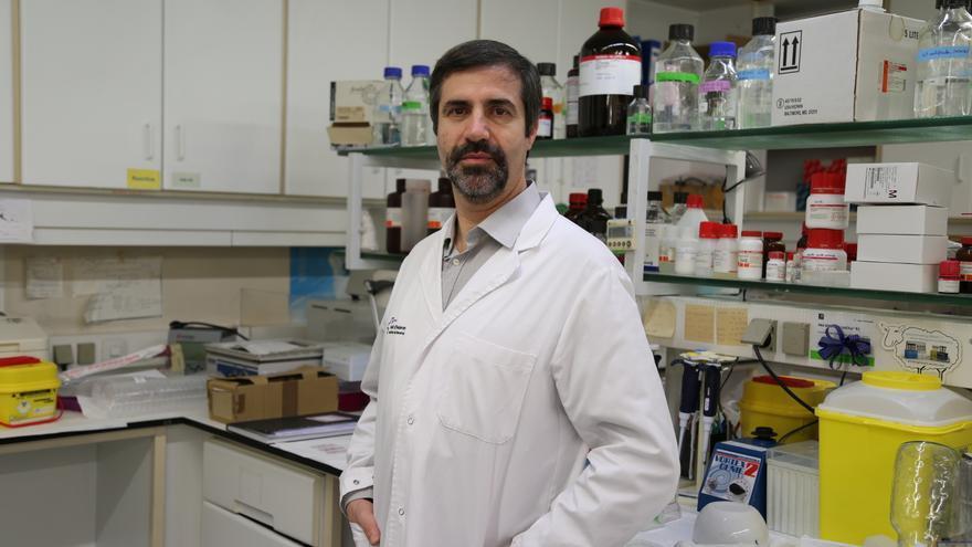 El doctor Quer, en su laboratorio del Vall d'Hebron