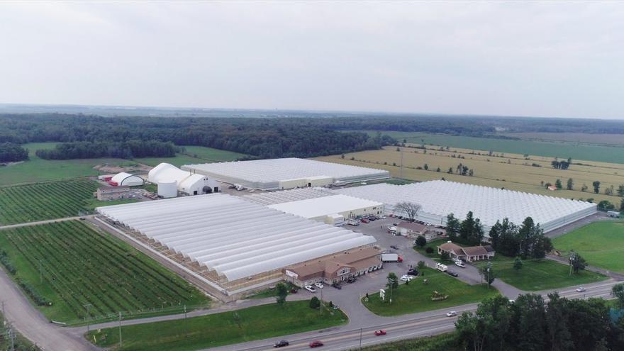 La fábrica de Canopy Growth, empresa líder en el mundo de cultivo de marihuna.