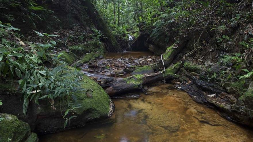 Humala oficializa la creación de una reserva natural reclamada a nivel internacional