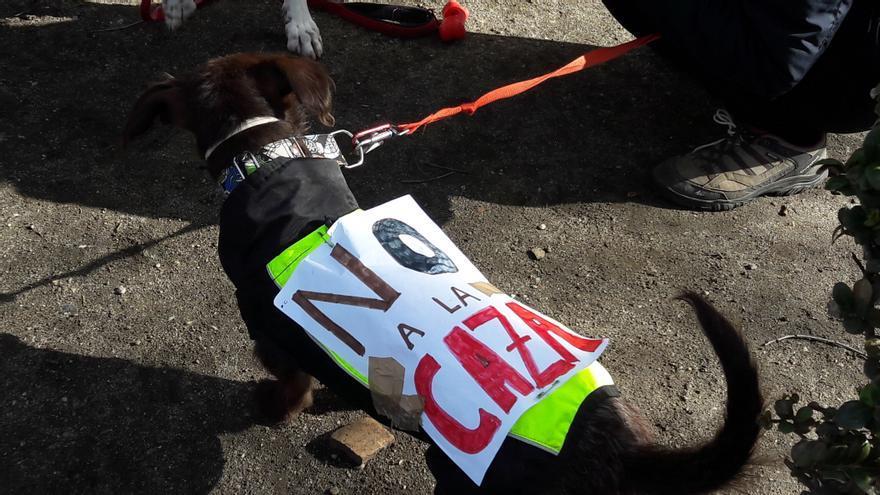 Manifestación contra la caza en Toledo