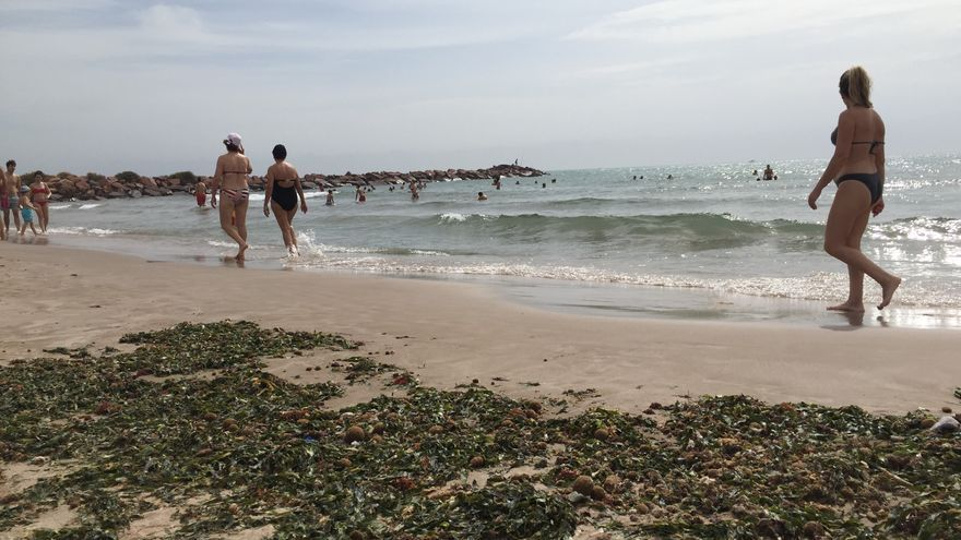 Algas en una de las playas valencianas