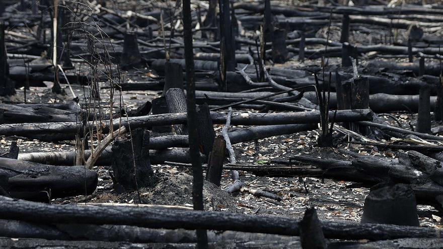 """Expertos avisan de la """"pérdida alarmante"""" de la biodiversidad en los trópicos"""