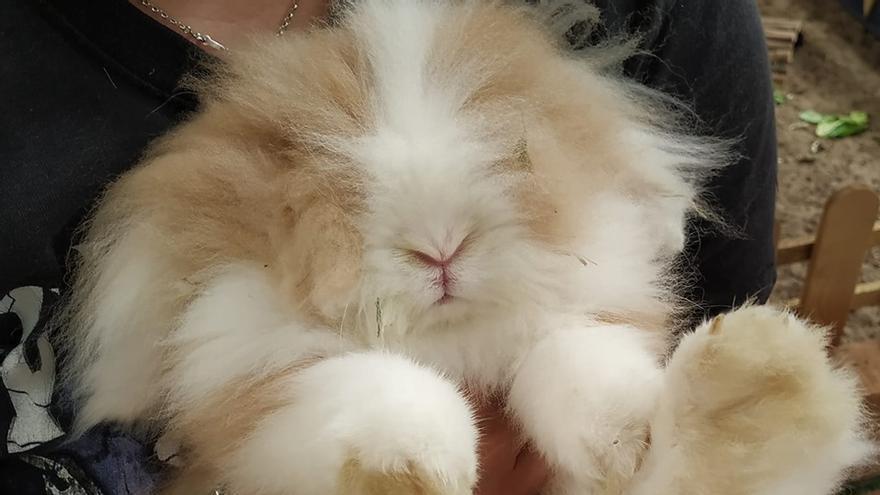 El conejo Junio falleció recientemente. Este post es también un homenaje para él.