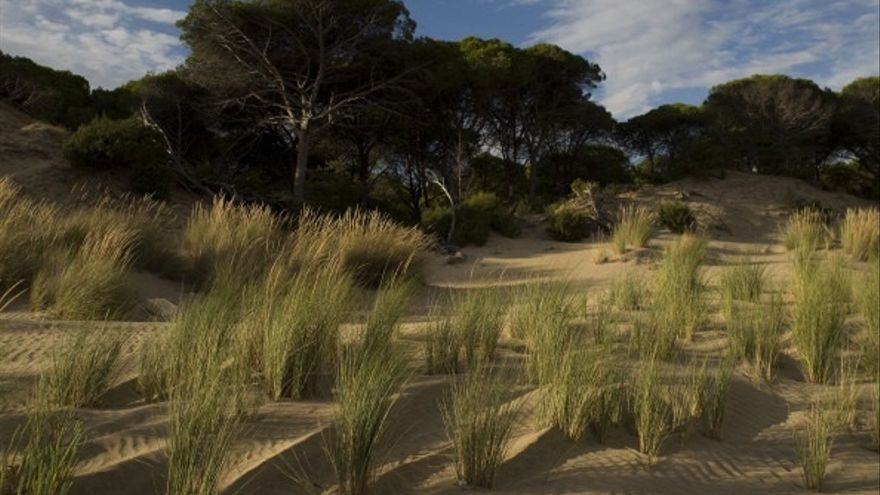 Díaz anuncia que la Junta aprobará este mes los planes de ordenación y gestión de Doñana y ampliará 14.000 hectáreas