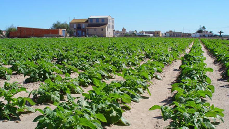 Cultivos ecológicos en la huerta de Valencia