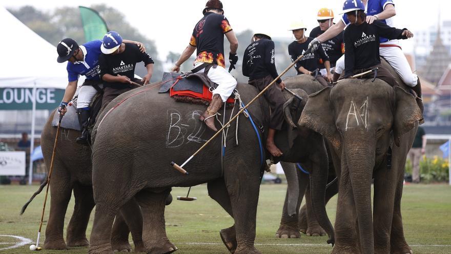 Los mejores jugadores de polo a escala mundial viajan a la capital tailandesa para ayudar a los elefantes.