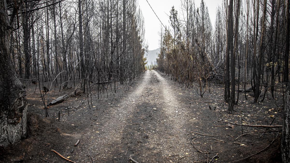 El incendio que comenzó el martes en Chubut dejó dos muertos y más de 300 casas destruidas.