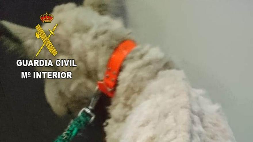 """Guardia Civil investiga a un hombre por tener a su perro en un estado de desnutrición que """"le impedía mantenerse de pie"""""""