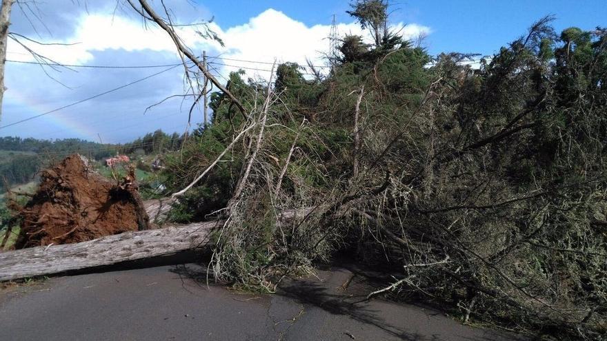 Vía cortada por la caída de un árbol, este domingo en Canarias