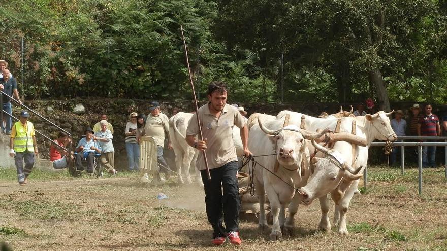 Un grupo de ganaderos de vaca palmera, hace 20 años, decidieron formar el Club de Arrastre la Canga. Foto: Alejandro Escuder.