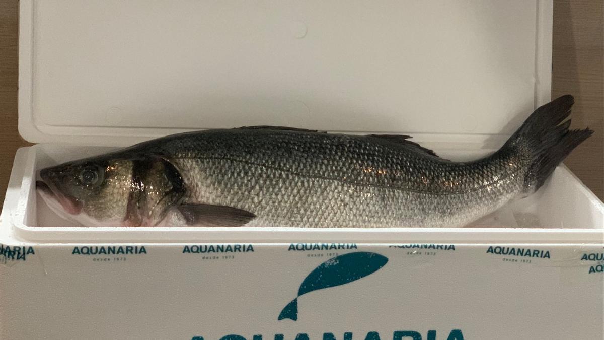 Lubina Aquanaria