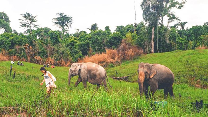 Desde hace dos años Kowabunga Ecoproject trabaja también por la conservación de elefantes en Camboya.