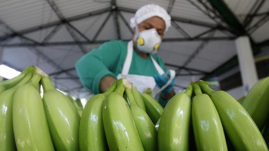 Ciencia e industria se unen en el Congreso Internacional del Banano en Miami