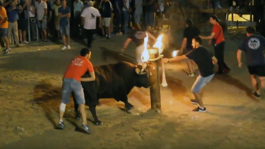 El 'bou embolat' en El Grau de Castellón
