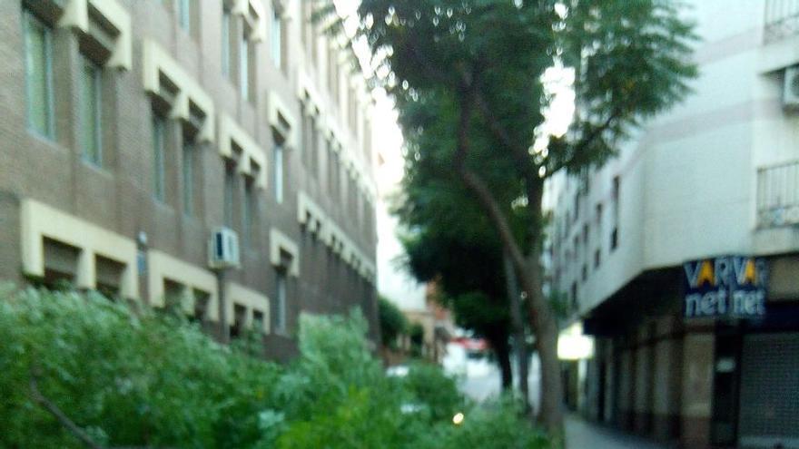 Arbol caido Ciudad Real 2. Agosto 2014.