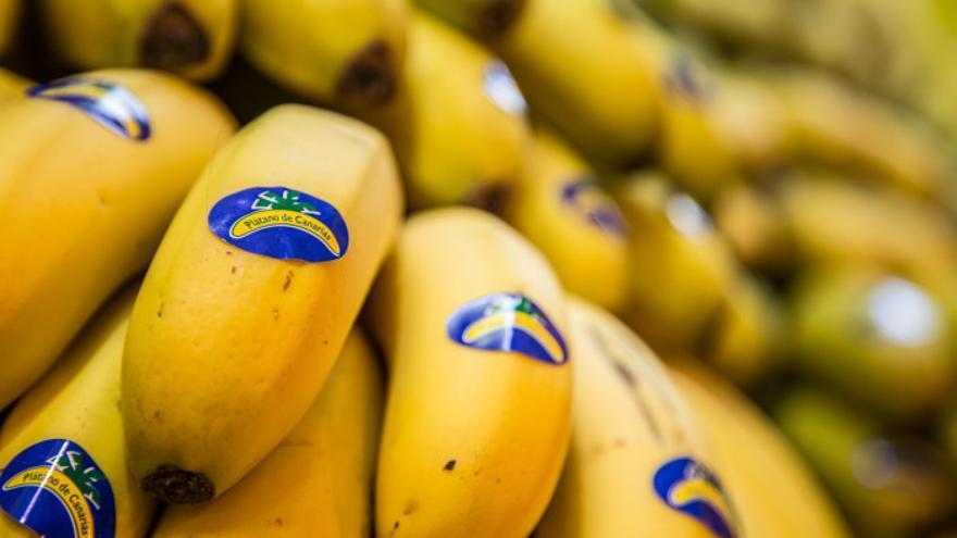 Manillas de plátanos producidos en Canarias