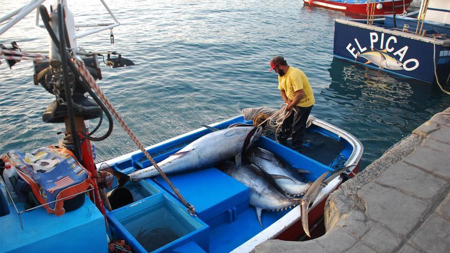 Un pescador desembarca tres capturas de atún rojo en Arguineguín, en una imagen de archivo