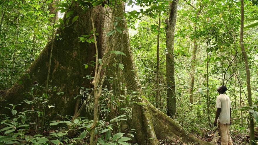 El bosque tropical en Gabón.