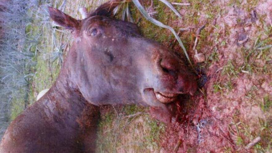 El caballo Sorky, muerto a palos / Abada