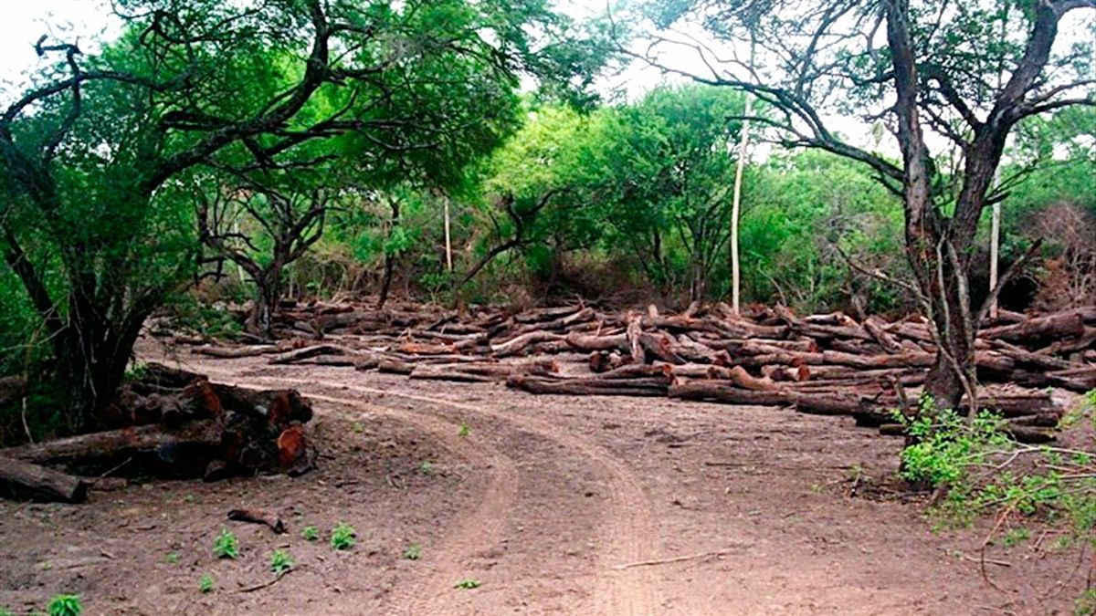 Se perdieron 6,5 millones de hectáreas de bosque nativo en los últimos 20 años en la Argentina.