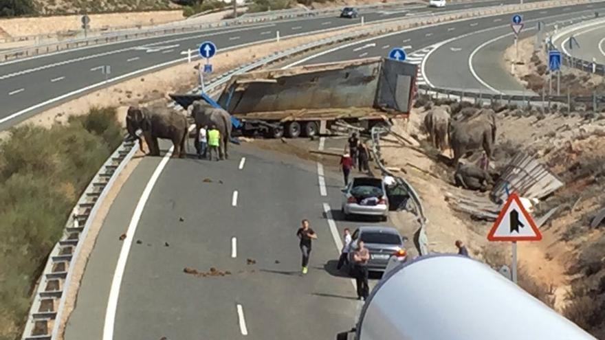 Camión que transportaba 5 elefantes accidentado en la A-30.